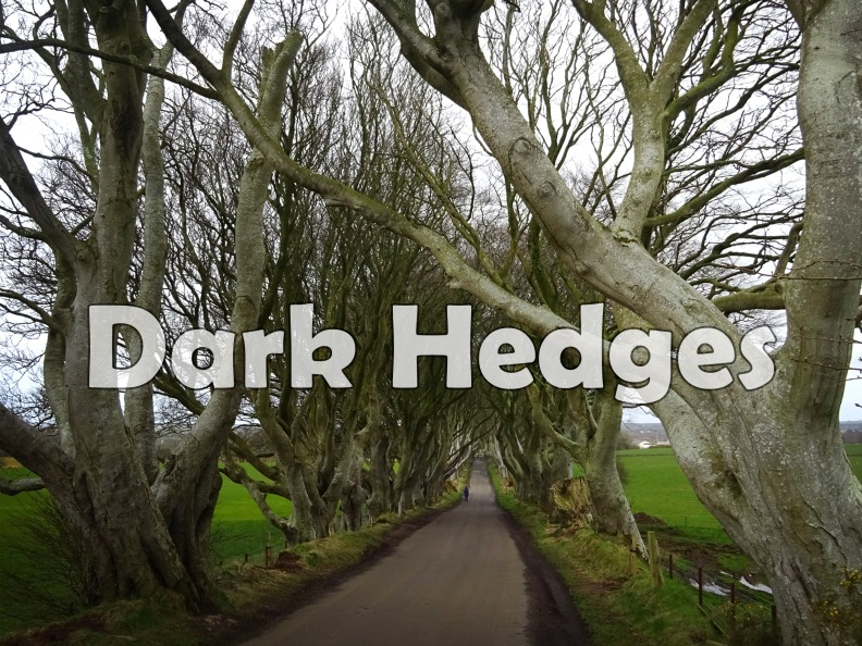 Dark Hedges.jpg