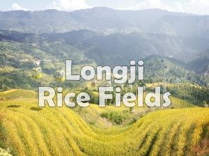 Longji Rice Fields.jpg